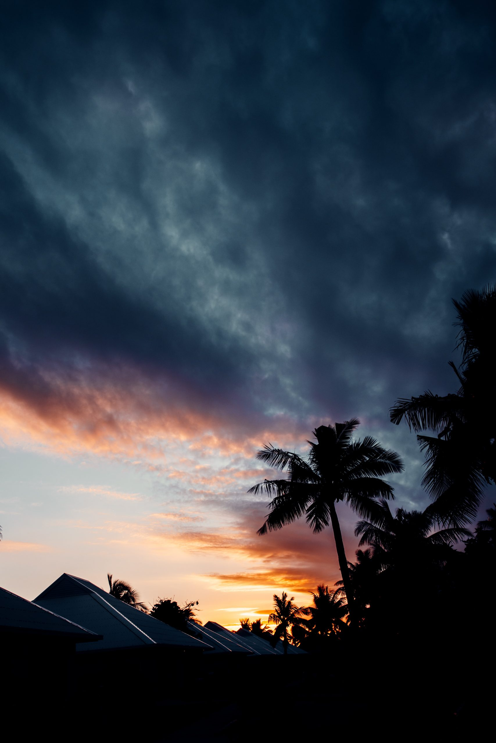 palm tree in front of sunset on an island getaway in fiji